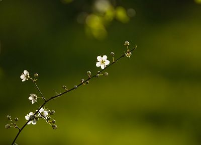 nature, flowers, depth of field - desktop wallpaper