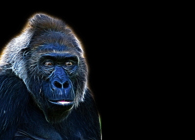 Fractalius, gorillas - related desktop wallpaper