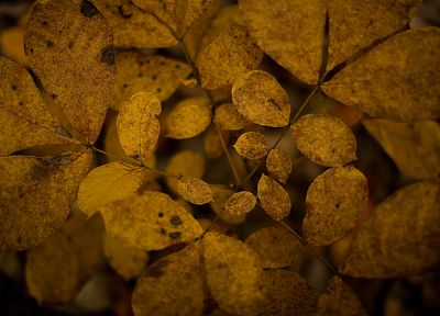 nature, autumn, leaves - related desktop wallpaper