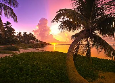 sunset, landscapes, trees, Florida, palm trees, sea - related desktop wallpaper