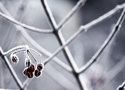 nature, frozen, macro, depth of field - desktop wallpaper