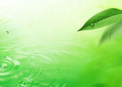 green, water, nature, leaves - random desktop wallpaper