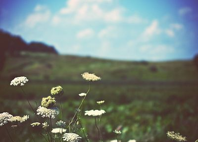 flowers, valleys, bokeh, Windows Vista, parks - random desktop wallpaper