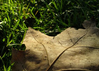 leaves, grass, macro, fallen leaves - related desktop wallpaper