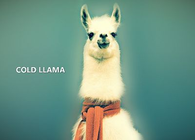 cold, DeviantART, llama - desktop wallpaper