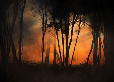 forests, fire, orange - random desktop wallpaper