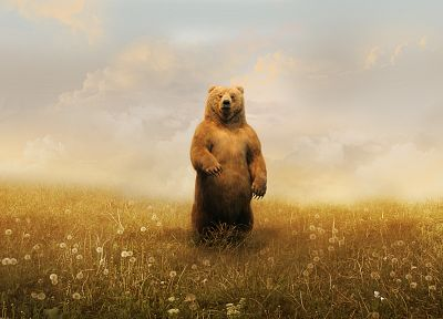 animals, artwork, bears - random desktop wallpaper
