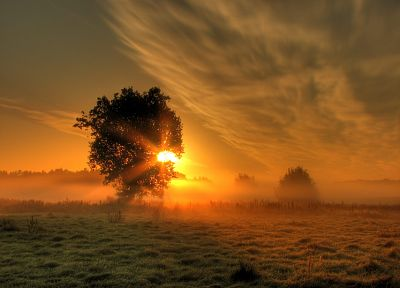 sunrise, clouds, landscapes, Sun, trees, meadows, mist - related desktop wallpaper