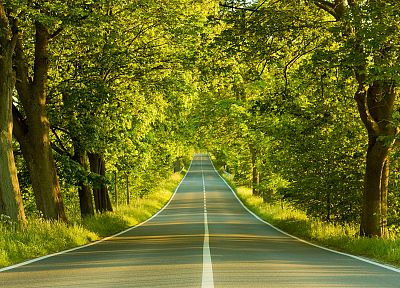 landscapes, nature, trees, roads - related desktop wallpaper
