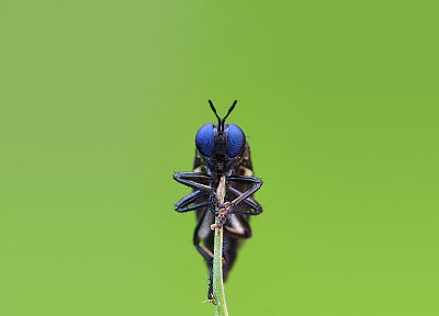 insects, Bug, iridescence, arthropod - related desktop wallpaper