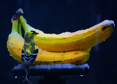 ice, birds, fruits, food, bananas - random desktop wallpaper