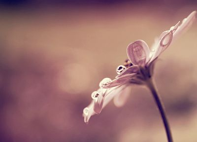 nature, flowers, macro, Flora, depth of field - desktop wallpaper