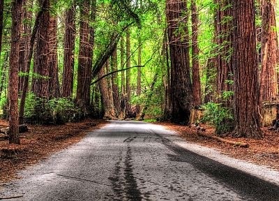 trees, forests, roads, HDR photography - random desktop wallpaper