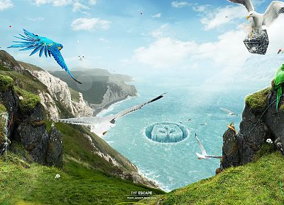 landscapes, birds, grass, rocks, parrots, fantasy art, seagulls, Desktopography, cove - desktop wallpaper