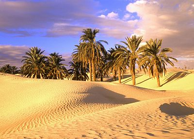 deserts, palm trees, sahara - random desktop wallpaper