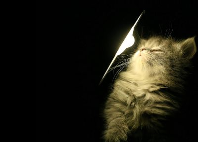 light, cats, black background - random desktop wallpaper