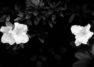 black, flowers, grayscale - random desktop wallpaper