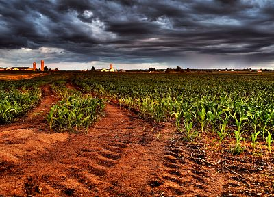 landscapes, fields, overcast, cornfield, tire tracks - related desktop wallpaper