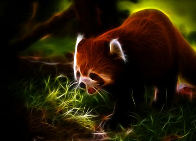 animals, Fractalius, red pandas - random desktop wallpaper