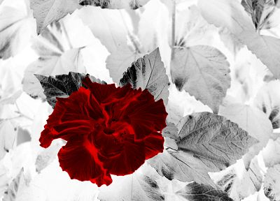 red, flowers, leaves, selective coloring - random desktop wallpaper