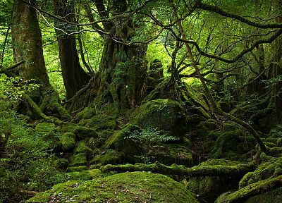 trees, forests, moss, roots - random desktop wallpaper
