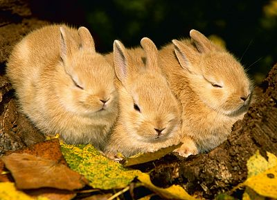 nature, rabbits, sleeping, baby animals, Young rabbits - related desktop wallpaper