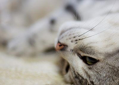 cats, animals, macro, kittens, depth of field - related desktop wallpaper