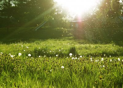 nature, grass, sunlight, dandelions - random desktop wallpaper