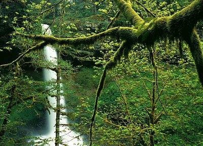 trees, north, silver, falls, Oregon, parks - duplicate desktop wallpaper