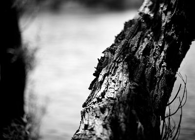 monochrome, tree trunk - random desktop wallpaper