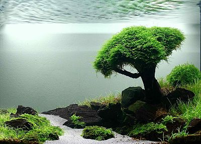 landscapes, trees, grass, streams, fish tank - random desktop wallpaper