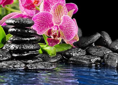 flowers, orchids, pink flowers - desktop wallpaper