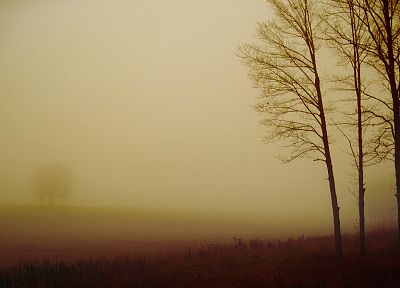 landscapes, nature, trees, fields, fog, dreamy, muted - related desktop wallpaper