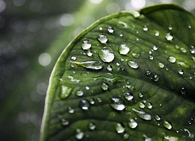 leaf, leaves, water drops, depth of field - related desktop wallpaper