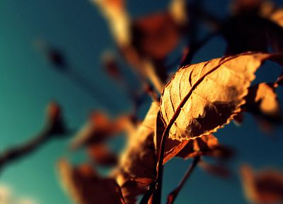 nature, autumn, leaves, macro, dreamy, depth of field - related desktop wallpaper