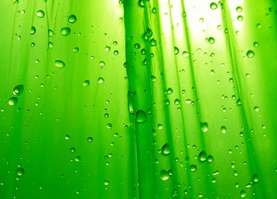 green, water drops, condensation - desktop wallpaper