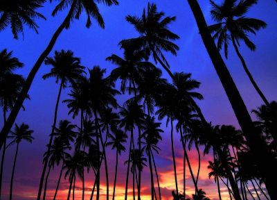 sunset, palm trees - related desktop wallpaper