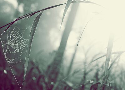 green, nature, grass, web, spiders - desktop wallpaper