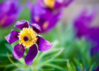 green, flowers, bloom, macro, purple flowers - related desktop wallpaper