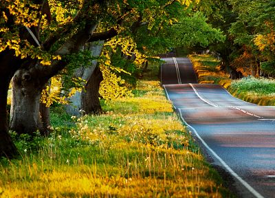 landscapes, trees, roads - related desktop wallpaper