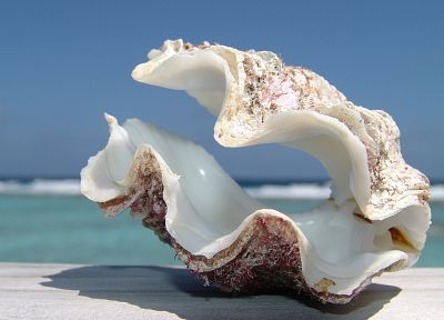 water, macro, seashells, sea - related desktop wallpaper