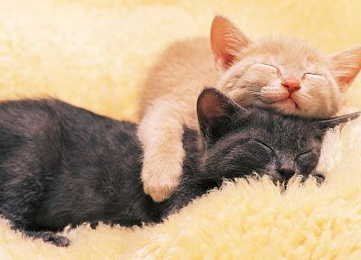 cats, animals, orange, sleeping, pets - related desktop wallpaper