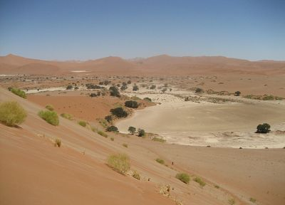 deserts, sand dunes, Africa, shrubs, Namib Desert - related desktop wallpaper