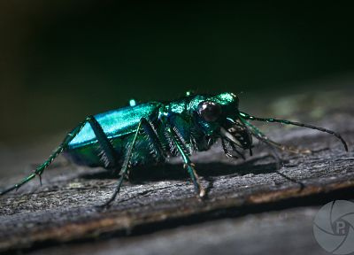 animals, insects, beetles, iridescence - related desktop wallpaper