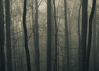 nature, trees, forests, fields, mist - related desktop wallpaper