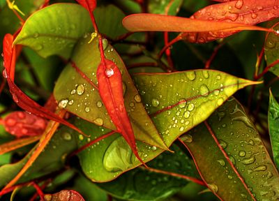 nature, multicolor, leaves, water drops - random desktop wallpaper