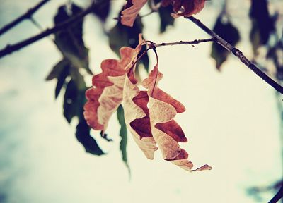 nature, leaf, autumn, leaves, depth of field, branches - related desktop wallpaper