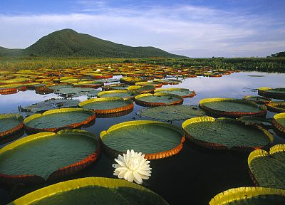 landscapes, lakes, lily pads, water lilies - desktop wallpaper