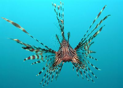fish, lionfish, underwater - desktop wallpaper