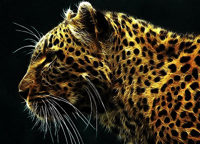animals, Fractalius, leopards, whiskers - random desktop wallpaper